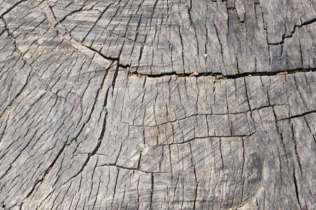 Stump of Tree Felled - Section of The Trunk Wood