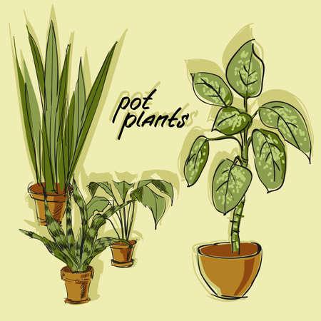 houseplant: Hand-drawn design elements pot plants. Sketch. Vector illustration.