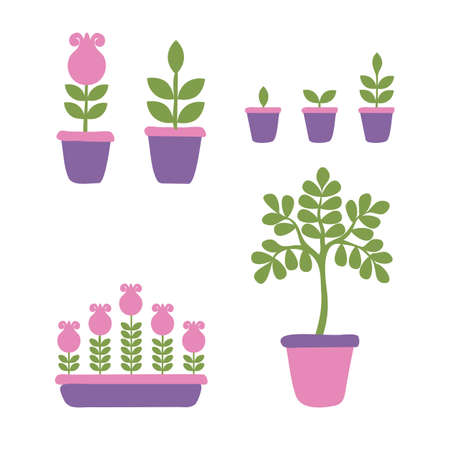Set of phases of the life cycle of home flowers and potted plants. Growth stages seedling. Ripening growing period in a pot and flower box. Vector illustration in cartoon style Ilustrace