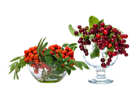 ash berry: Berry sweet-fruit mountain ash and red cherry in glass vases. Stock Photo