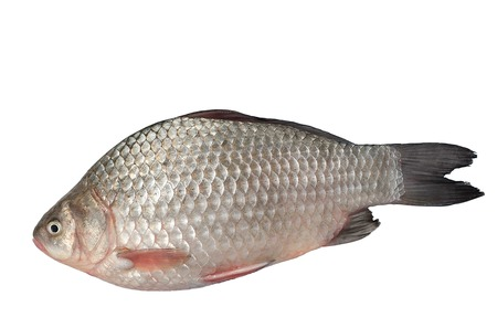 freshest: The freshest catch awaits cooking.Isolated on a white background.