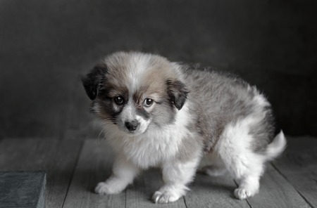 Little puppy standing on old wooden surface. Dark grey background, selective focus.