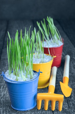 Seedling herbs in colorful buckets, and tools to take care of them. Selective focus, blue-gray background. Zdjęcie Seryjne