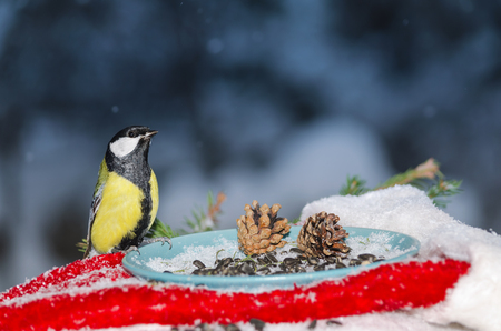 Bird in the feeder of sunflower seeds for Christmas. Plenty of space for text