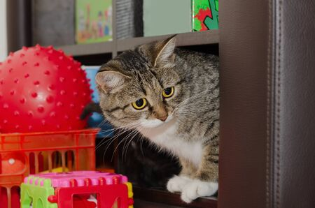 Gato joven sentado en un estante con juguetes. Enfoque selectivo