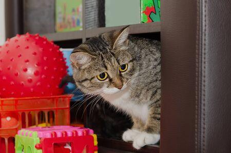 Giovane gatto seduto su uno scaffale con giocattoli. Messa a fuoco selettiva
