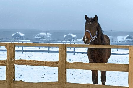 Horse in winter in the fence, snow falls. Village in the distance
