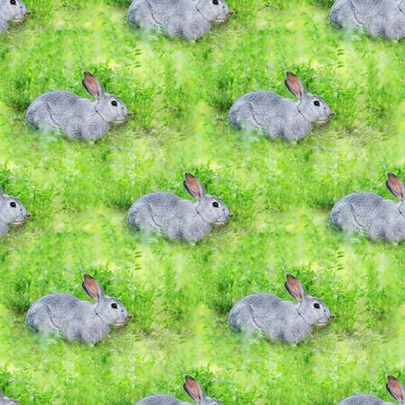 Summer seamless background with green grass and rabbits