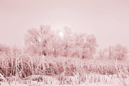 Misty landscape with trees and branches in frost, winter at dawn. Tinted in a pink color with a luminous effect. Christmas background Stock fotó