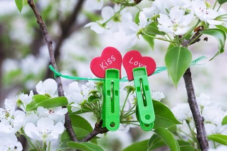 Hearts hang on clothespins in the garden, on flowering branches.