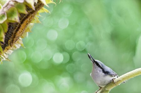 A bird with a seed in its beak on a green summer background. Selective focus