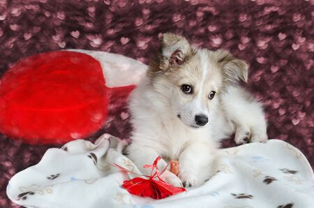 A cute puppy is lying on the background of a red heart-shaped pillow. Bokeh in the shape of hearts