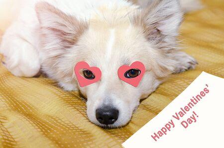 Un perro con corazones en los ojos está acostado sobre una manta. Saludos de San Valentín en papel. Foto de archivo
