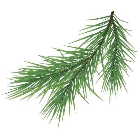 Green lush spruce branch. Fir branches on white illustration Reklamní fotografie - 66280712
