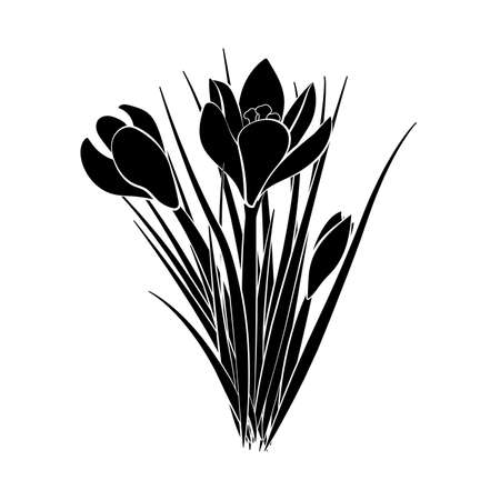 Hand drawn crocus flowers. Elegant vintage card. Three black crocus with white stroke. Vector