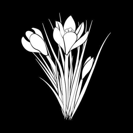 Hand drawn crocus flowers. Elegant vintage card. Three white crocus with black stroke on black background. Vector