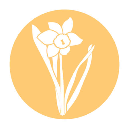 Spring flower icon. White narcissus in flat design. Orange round circle flat icon. Vector