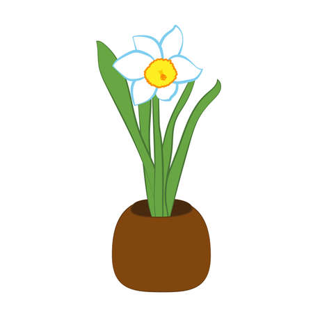 Narcissus flower in a pot. Flat illustration isolated on white background. Vector