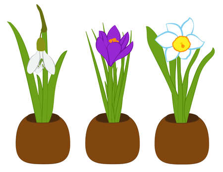 Set of spring snowdrop, narcissus and crocus in flower pots isolated on white. Vector Illustration