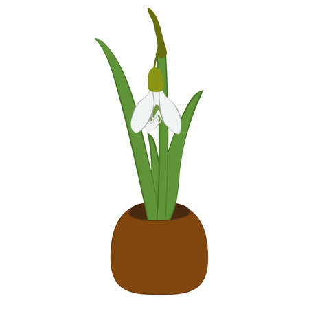 Spring snowdrop in flower pot isolated on white. Vector