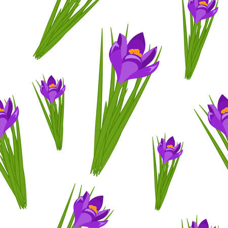 Beautiful spring seamless pattern with crocuses. Purple flowers different sizes of saffron on a white background. Vector