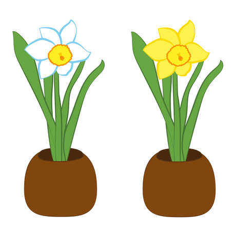 Set of blue and white with yellow narcissus flower in a pots. Flat illustration isolated on white background. Vector Ilustrace