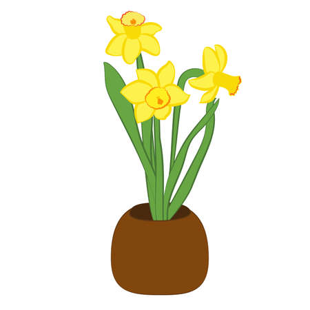 Three yellow narcissus flower in a pot. Flat illustration isolated on white background. Vector