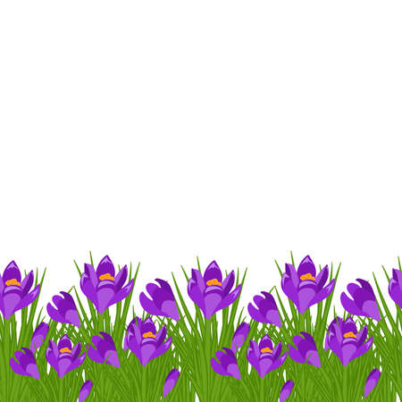 Spring postcard with purple small crocus. Early spring purple flower Crocus for Easter on white background vector
