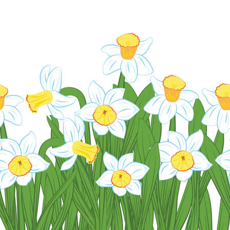 Postcard of green grass with blue and white narcissus flowers isolated on white vector Ilustrace