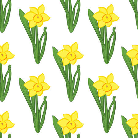 Seamless pattern. Green grass with yellow narcissus flowers same sizes isolated on white. Vector