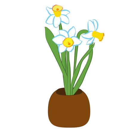 Three blue and white narcissus flower in a pot. Flat illustration isolated on white background. Vector