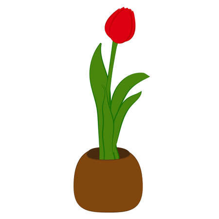 Red tulip flower in brown pot isolated on white. Vector