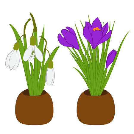 Set of spring snowdrop and crocus bouquets in flowers pots isolated on white. Vector Ilustrace