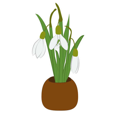 Spring snowdrops bouquet in flower pot isolated on white. Vector