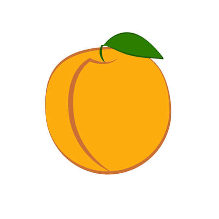 Apricot with leaves on a white background. Vector illustration.