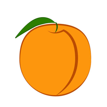 Peach fruit with leaf on a white background vector Illustration