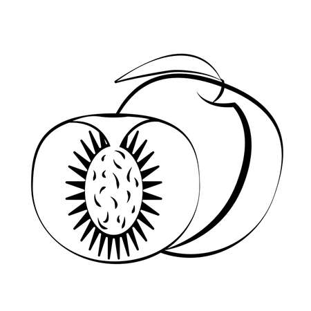 Peach fruit and slice with leaf on a white background. White fruit with black stroke. Vector Illustration