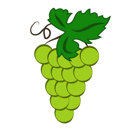 Bunch of green wine grapes with leaf flat color icon for food apps and websites. Vector illustration Illustration