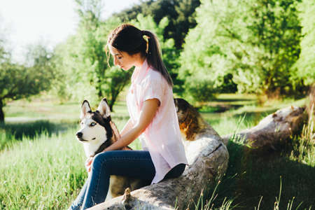 A young girl is training a dog of the Husky breed. Stock Photo
