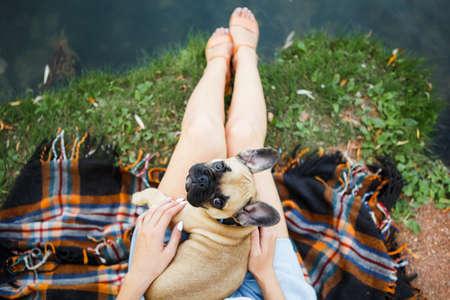 Cute puppy french bulldog in summer park. Stockfoto