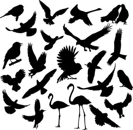 Set Birds illustration  向量圖像