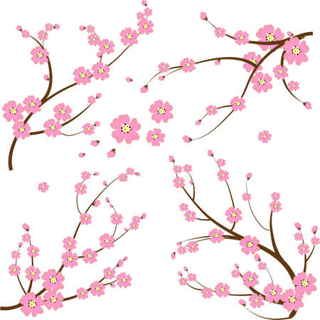 cherry blossoms: Rama japonesa Vectores