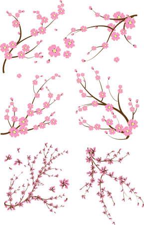 fleur cerisier: Ensemble de six branche japonaise Illustration