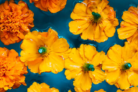 Orange flowers on blue water background. Flat lay. Top view