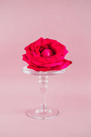 Pink rose on a glass cake stand on pink backgrounds, trends composition