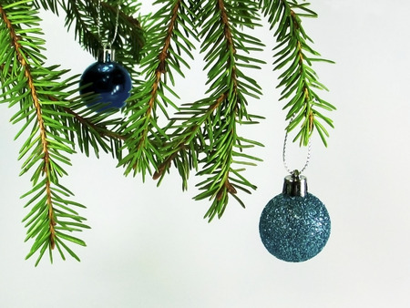 christmas tree branch: The blue ball on the Christmas tree branch