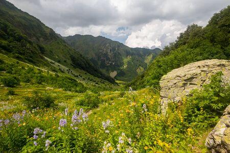 Pristine, untouched forest in the highlands, green hills. Stok Fotoğraf