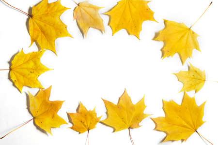 Yellow Autumn fallen foliage on white background. 写真素材