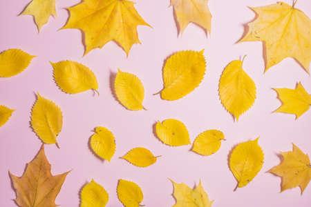 Autumn fallen foliage on pink background 写真素材