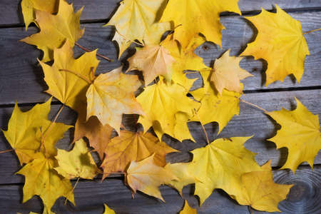 Autumn fallen foliage on wooden background